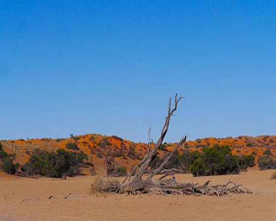 Mariental-Namib-Safari-Kalahari-Scenery-Mariental-Zone37-560-3.jpg