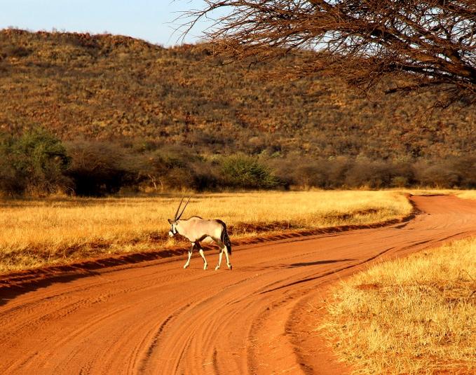gemsbok_okonjima_nature_reserve,_namibia.jpg
