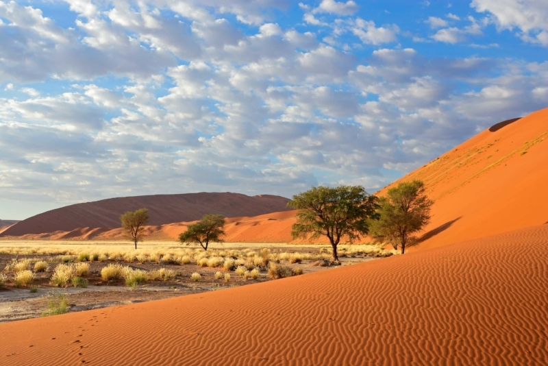 La Grande Traversée - Ce voyage complet va d'Etosha au désert du Namib, en passant par l'Ovamboland, l'oasis des chutes d'Epupa où vivent les Himbas, la région reculée de l'Hoanib à la recherche des éléphants du désert, les gravures rupestres de Twyfelfontein et la ville balnéaire de Swakopmund.                                                              14 jours / 13 nuits