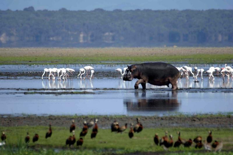 Kwa-Zulu Natal - Cette belle province d'Afrique du Sud est luxuriante et pleine d'animaux. Non seulement peut-on visiter et découvrir une abondance de réserves lors d'un safari, mais aussi profiter des eaux tropicales chaudes le long de l'océan Indien toute l'année.