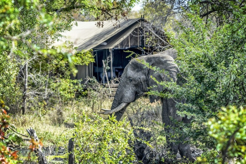 Safari en tente de luxe -