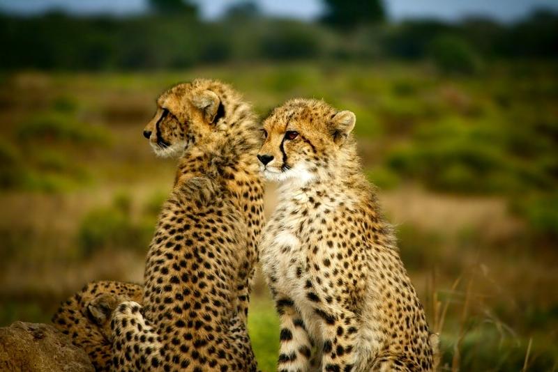 Le Parc National Kruger -