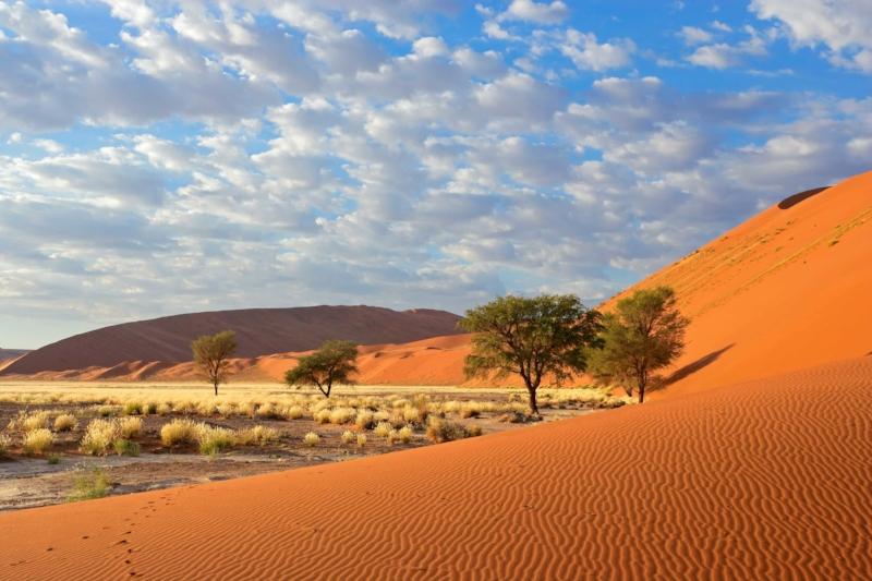De Cape Town À La Namibie