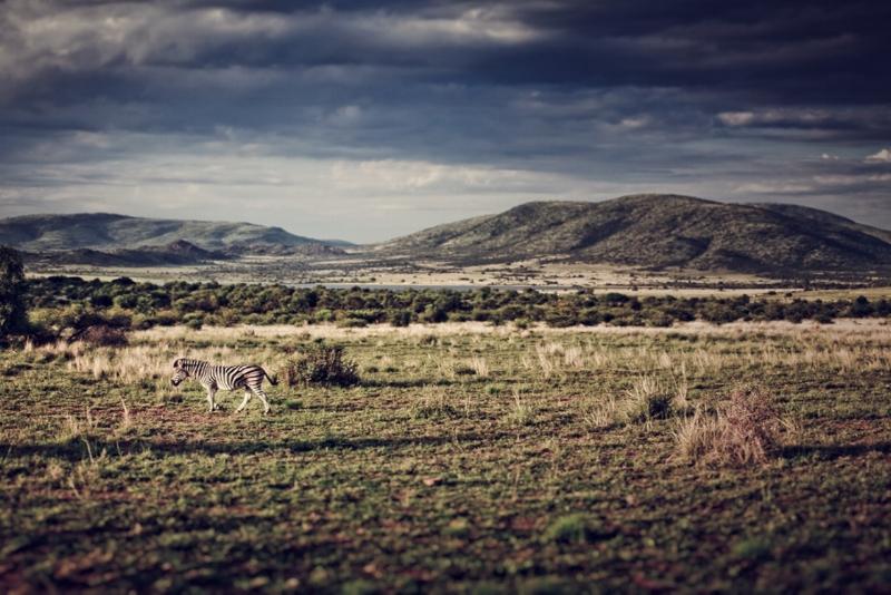 Pilanesberg Reserve -