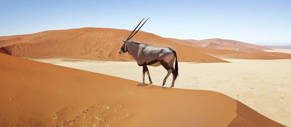 destination-sossusvlei-namibia.jpg