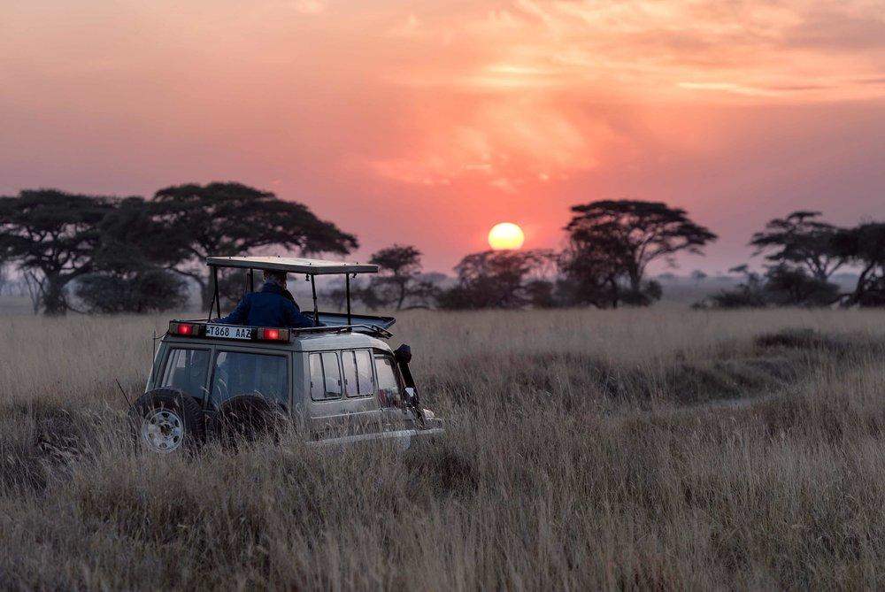 Safari - Nous offrons une large gamme de safaris africains authentiques qui répondront à toutes vos attentes et exigences.