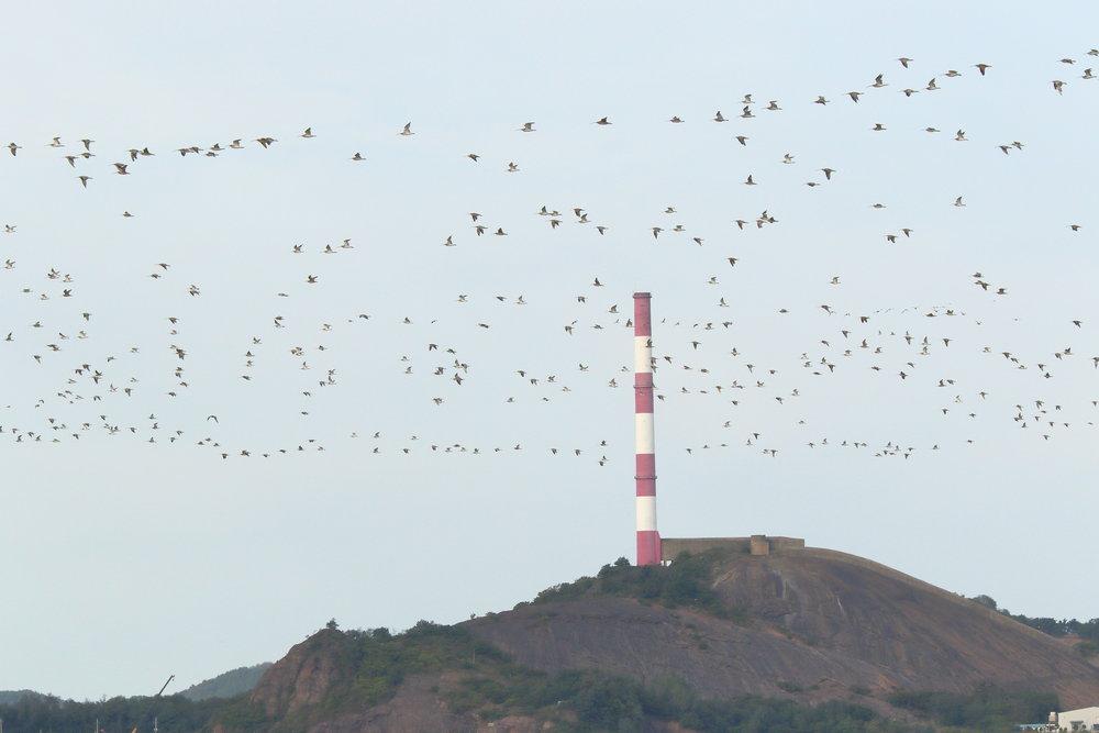 aerial roost.JPG