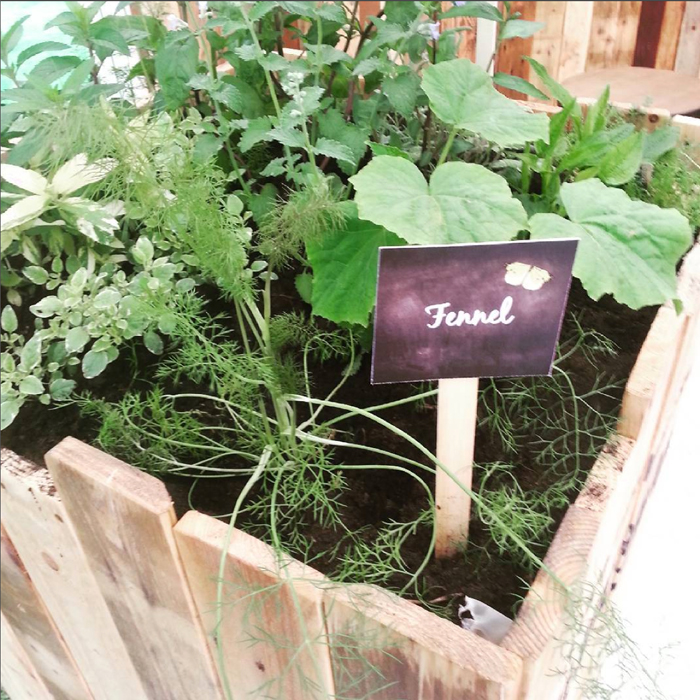 Fresh, aromatic herbs with a variety of health benefits