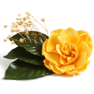 PRESERVED FLOWERS.JPG