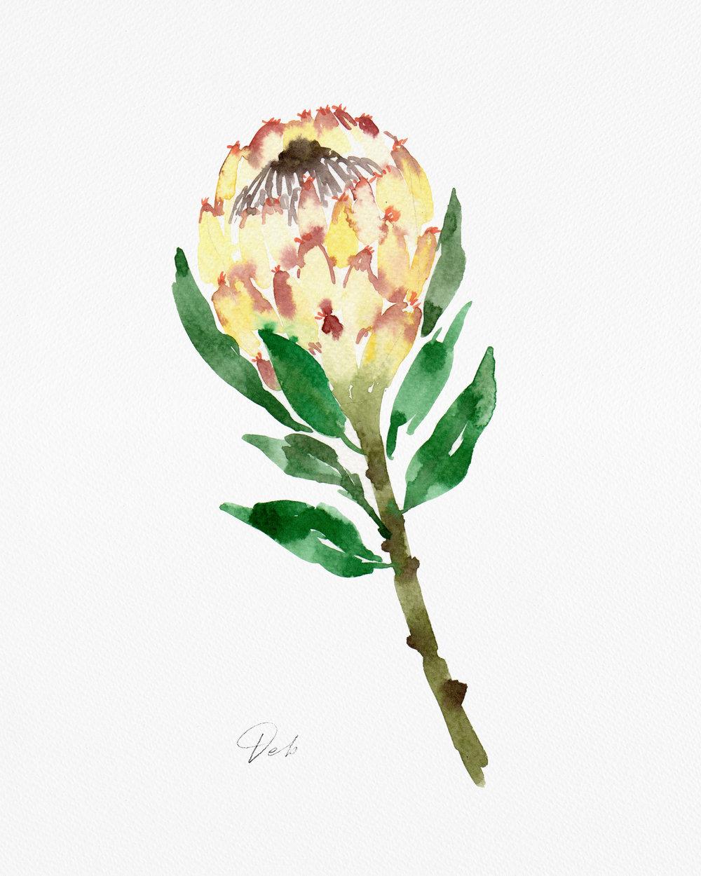 Protea-Ice-Queen.jpg