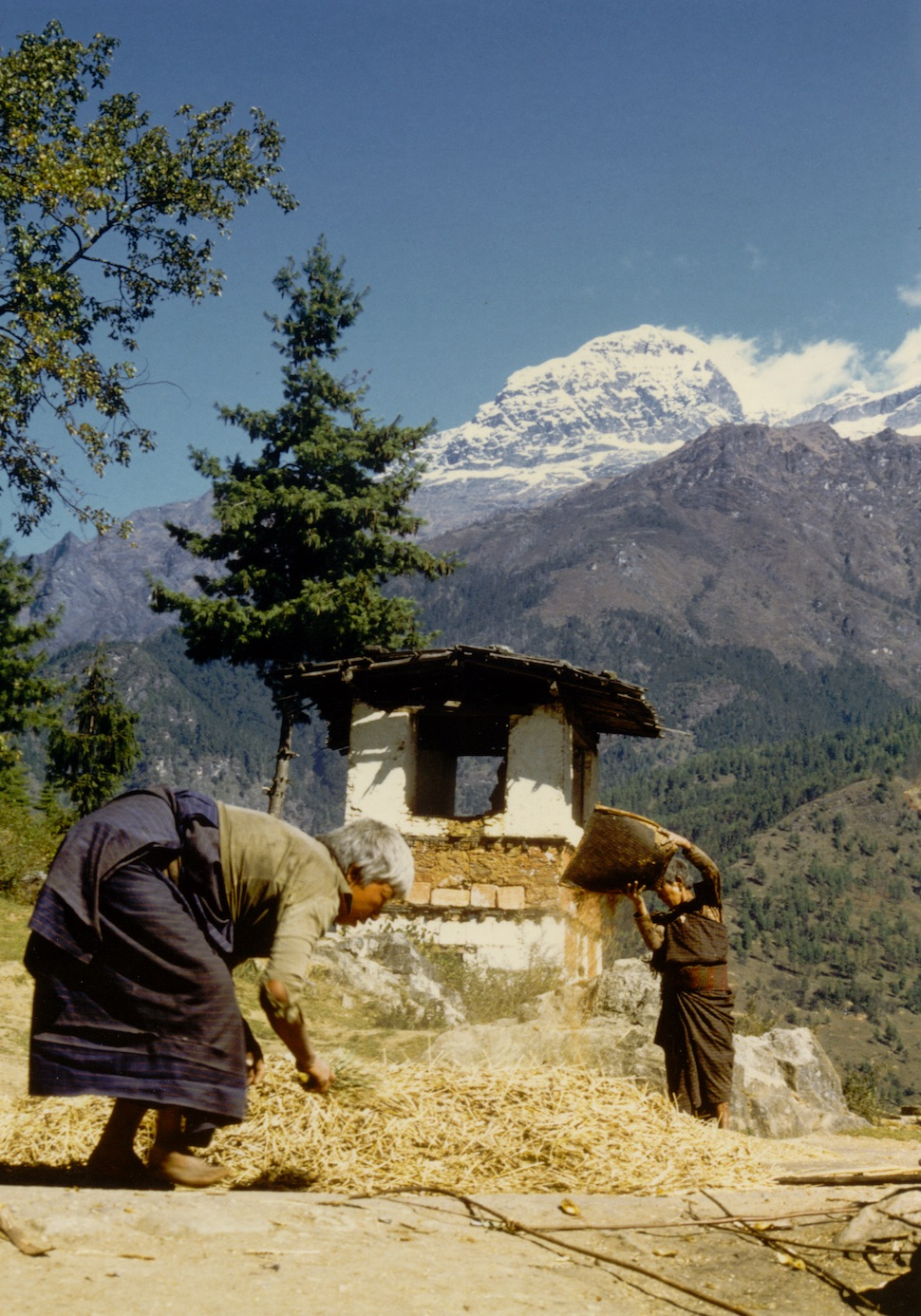 Southern Bhutanese women winnowing grain in the cooler valleys of the north.  The warmer southern hills and plains are highly fertile and have provided most of Bhutan's food.