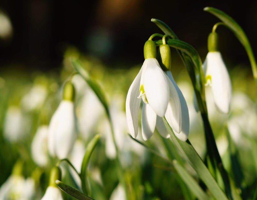 nature-bird-plant-white-sunlight-flower-816130-pxhere.com.jpg