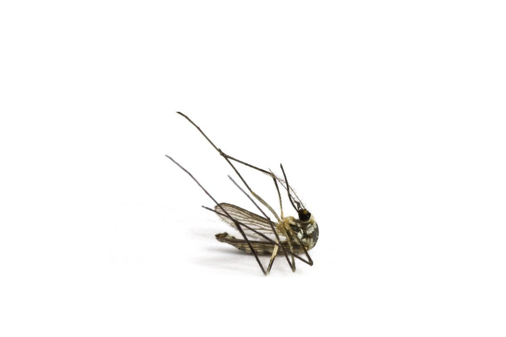 the only good mosquito is   A Dead One    schedule service today!