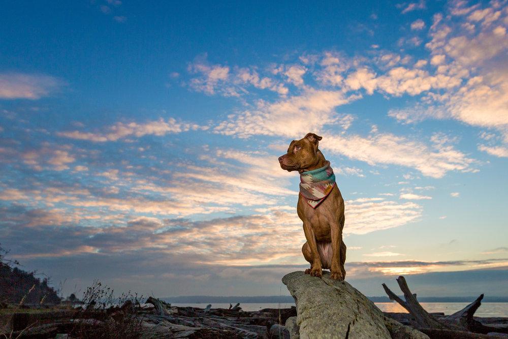 Lelani | Seattle Dog Photography
