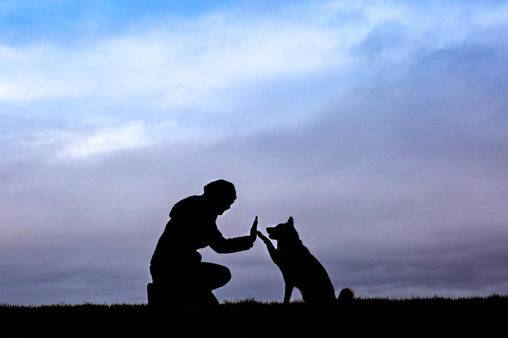 Sumo Silhouette | Seattle Dogs