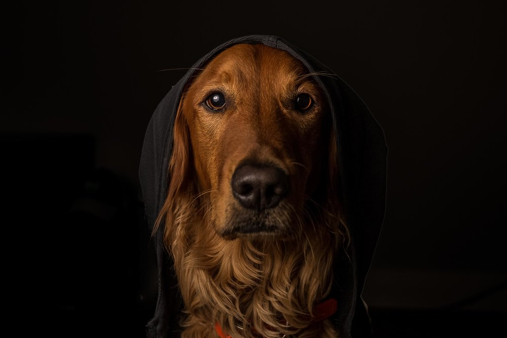Riley | Dog Photography in Seattle