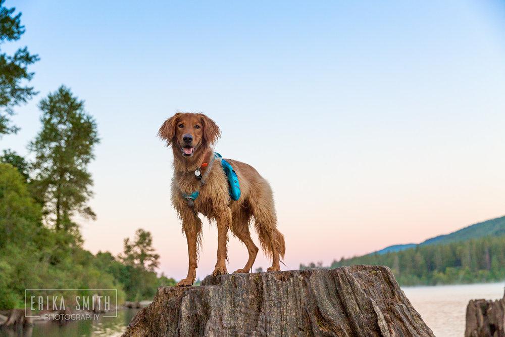 Riley on Stump at Rattlesnake Lake