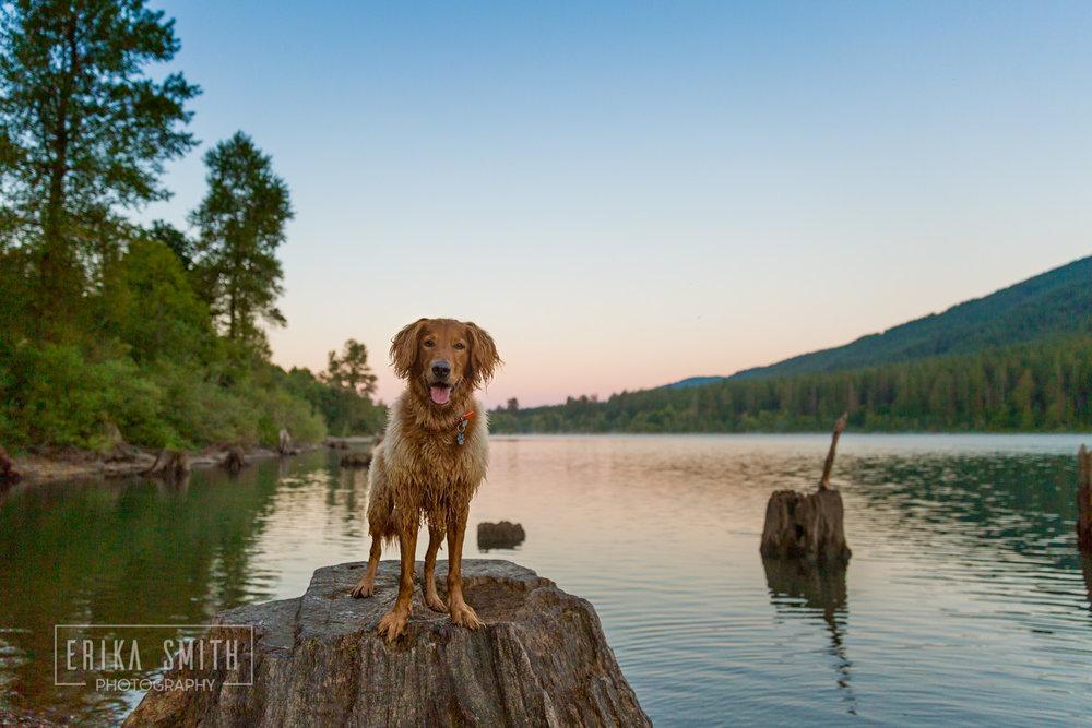 Sunrise with Riley at Rattlesnake Lake