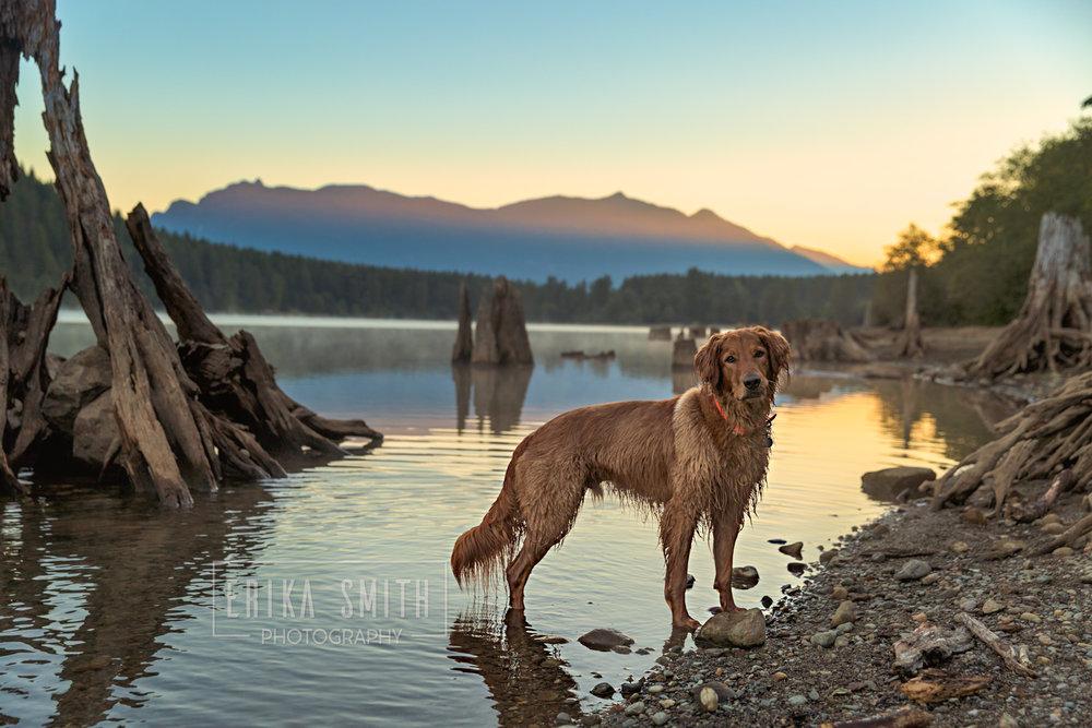 Riley in water at Rattlesnake Lake