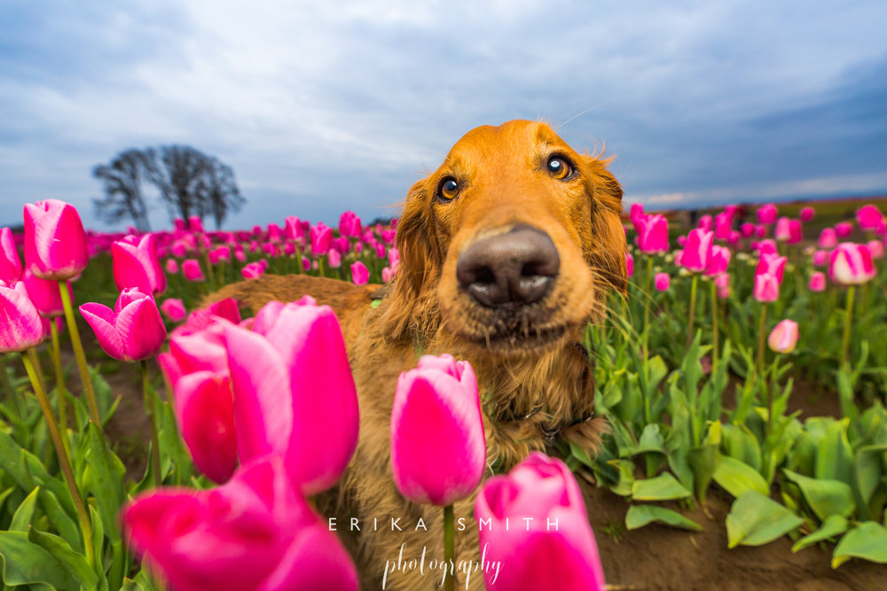 Woodburn Tulips & Riley