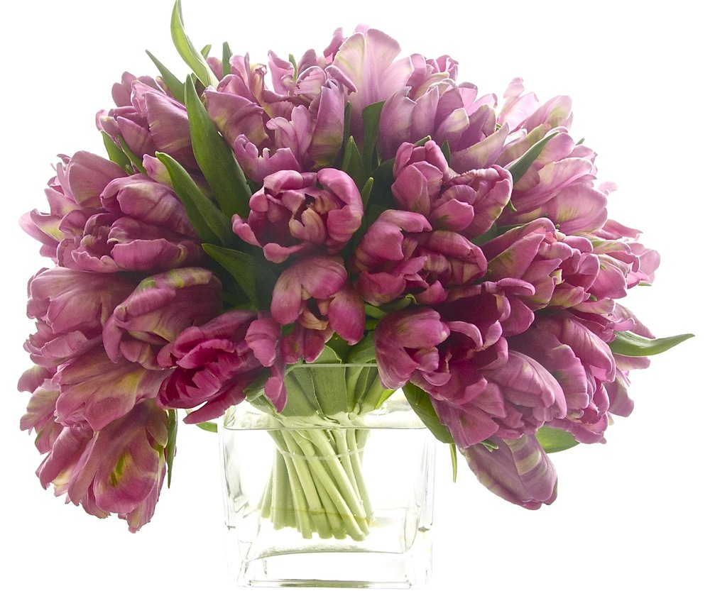 Purple Parrot Tulips