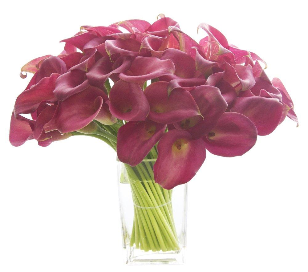 Pink Mini Callas