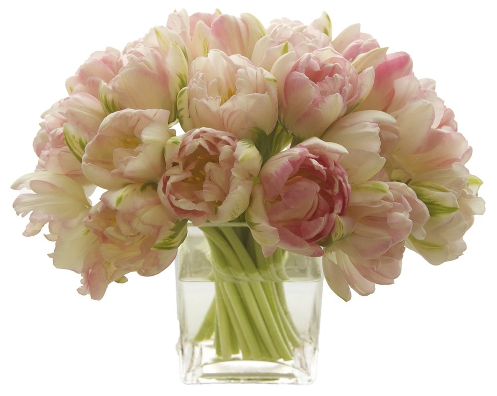 Double Pale Pink Tulips