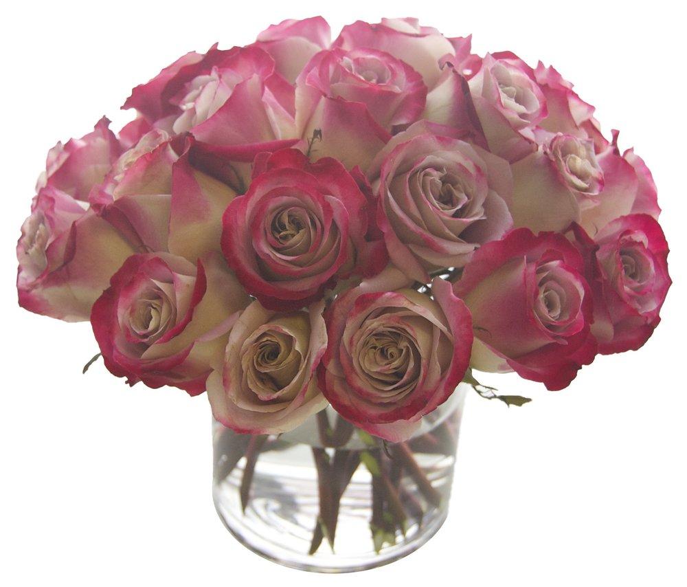 Purple Tinged Roses