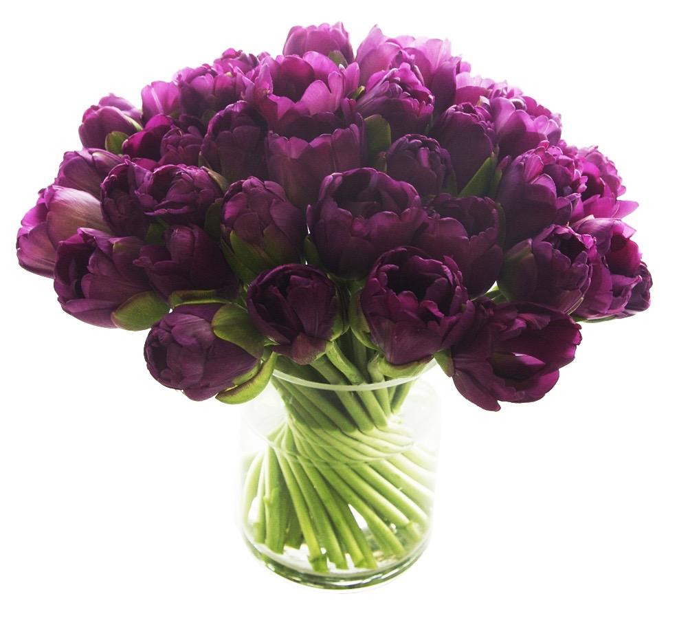 Purple Double Tulips