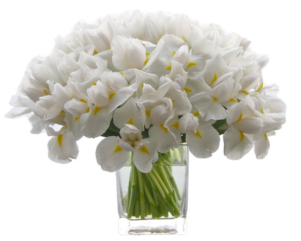 White Iris, from $100