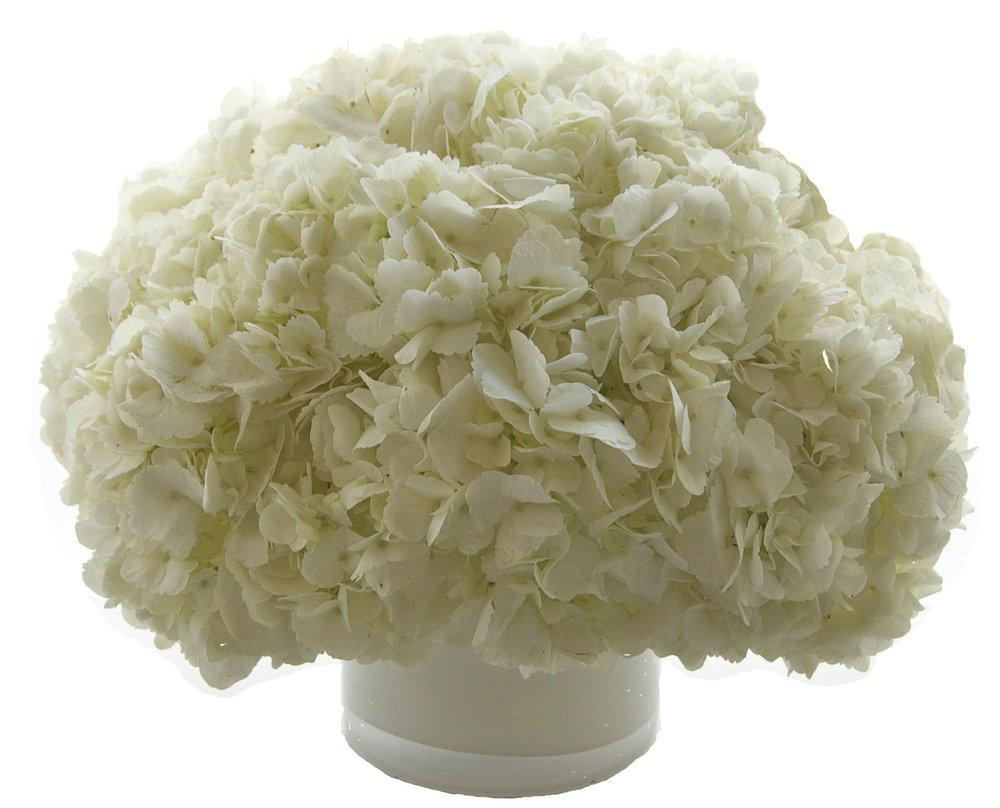 White Hydrangea, from $100