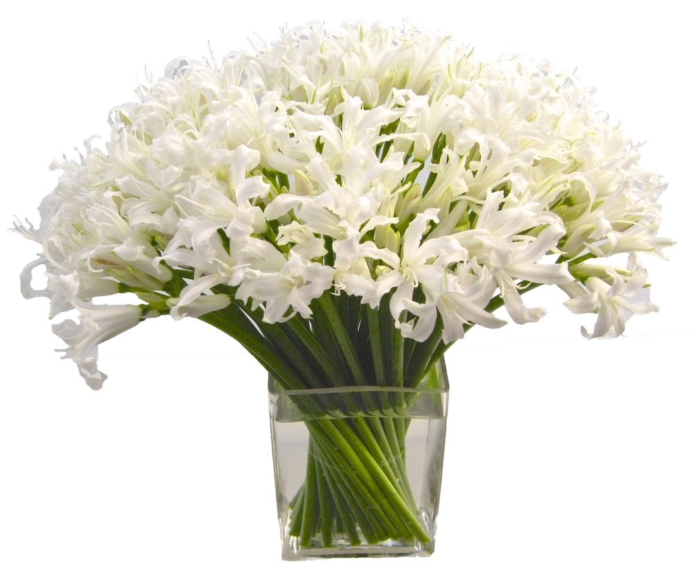 White Nerine from $225