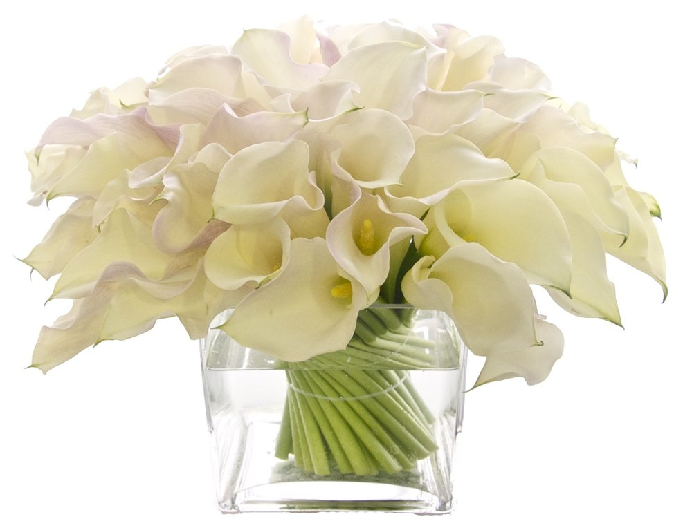 White Mini Callas