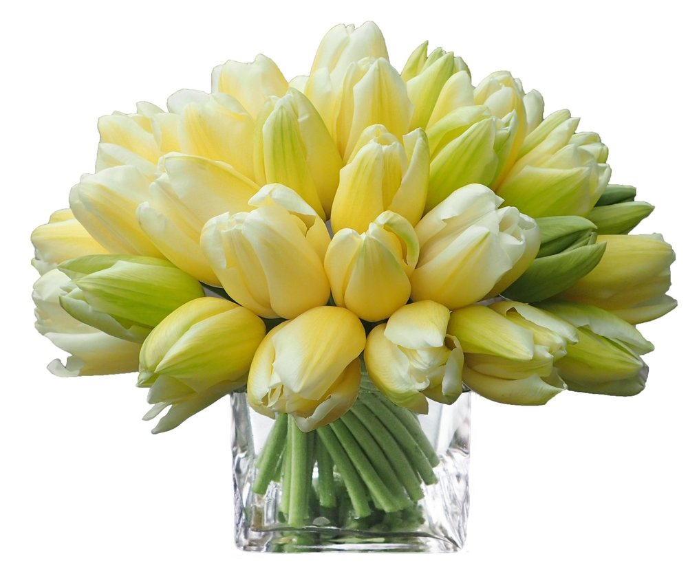 Coupe Tulips