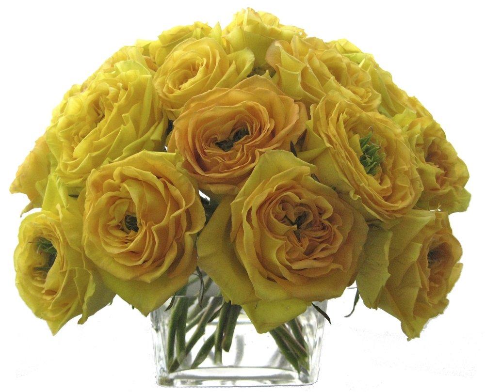 Yellow Garden Roses