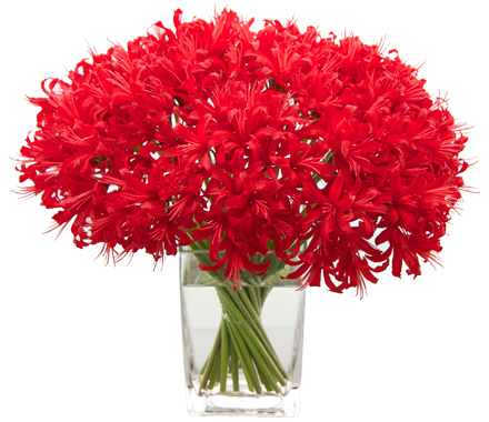 Red Nerine