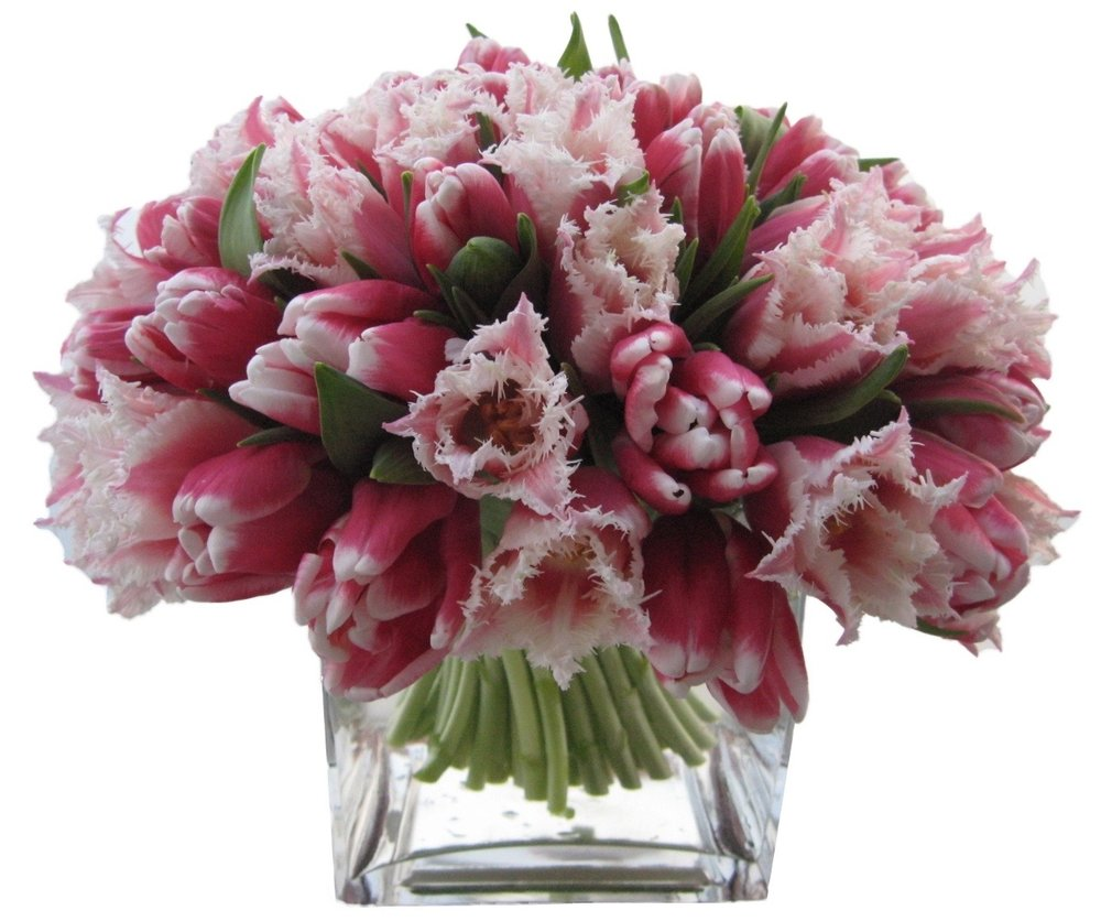 Pink Novelty Tulips