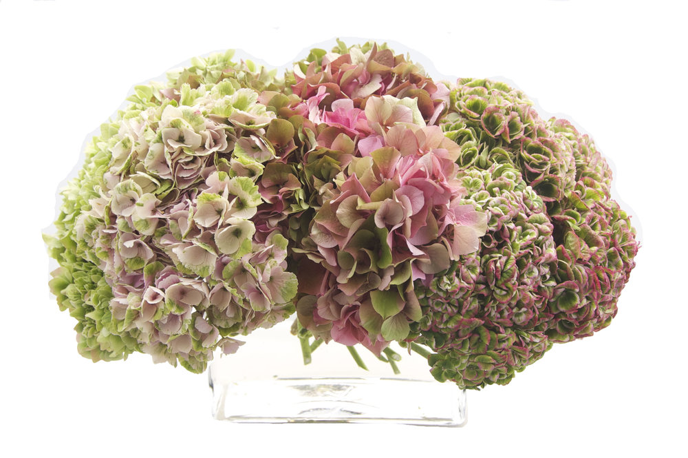 pink and green hydrangea copy.jpg