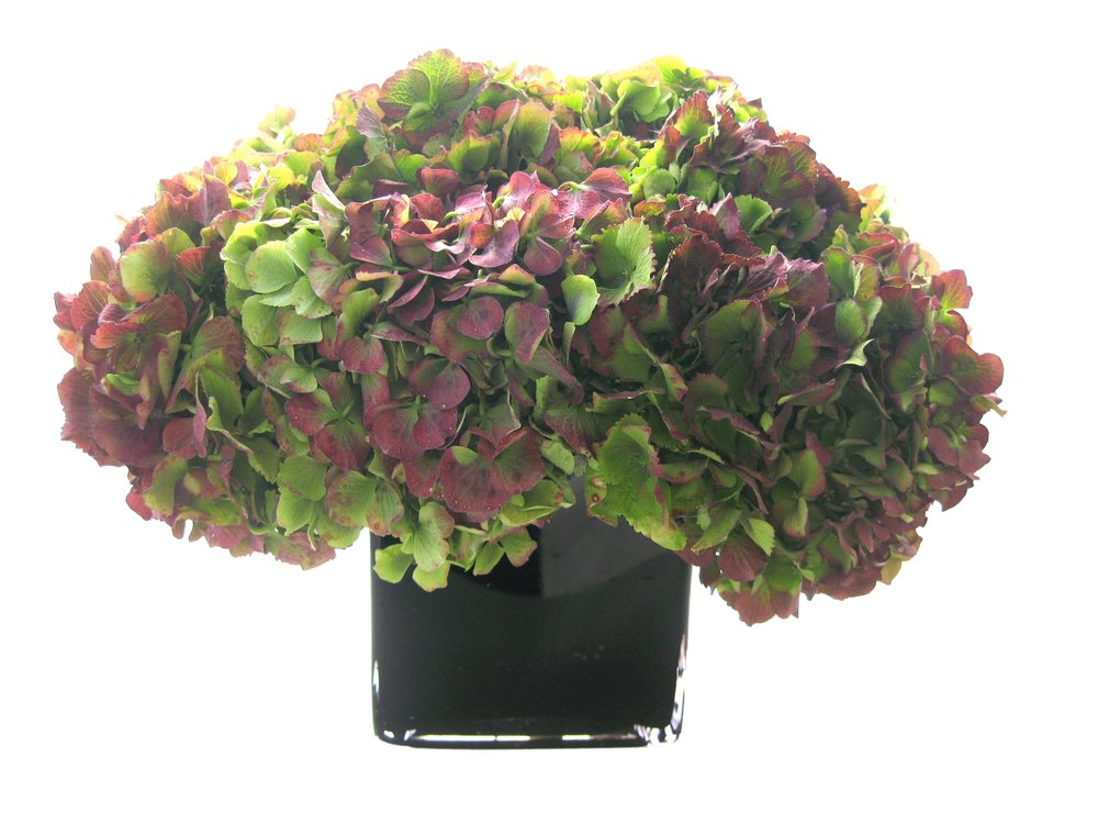 Purple and Green Hydrangea