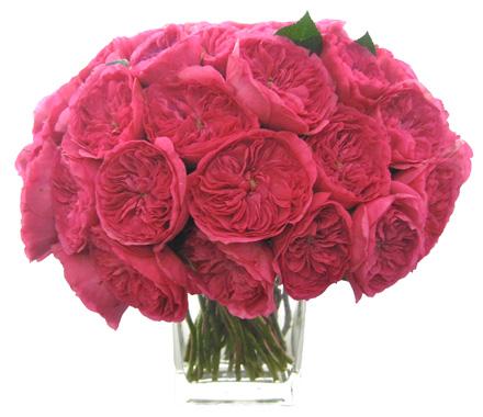 Hot Pink Garden Roses