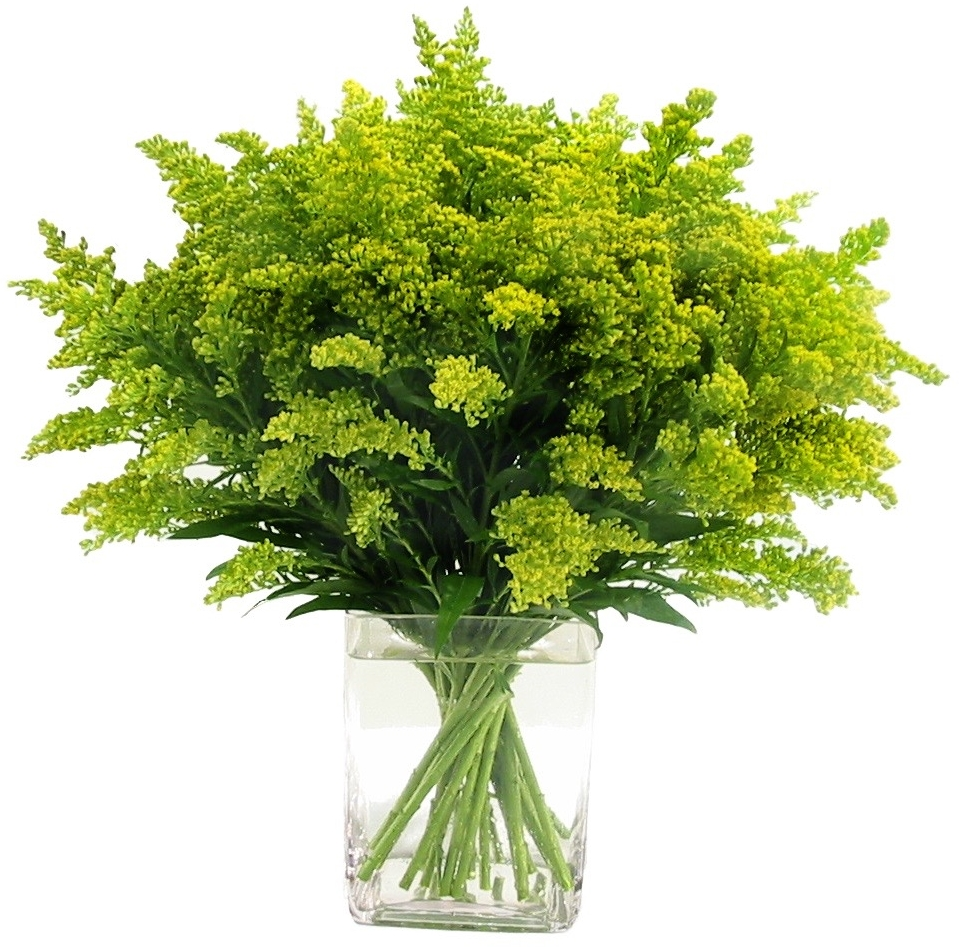 Solidago, from $150