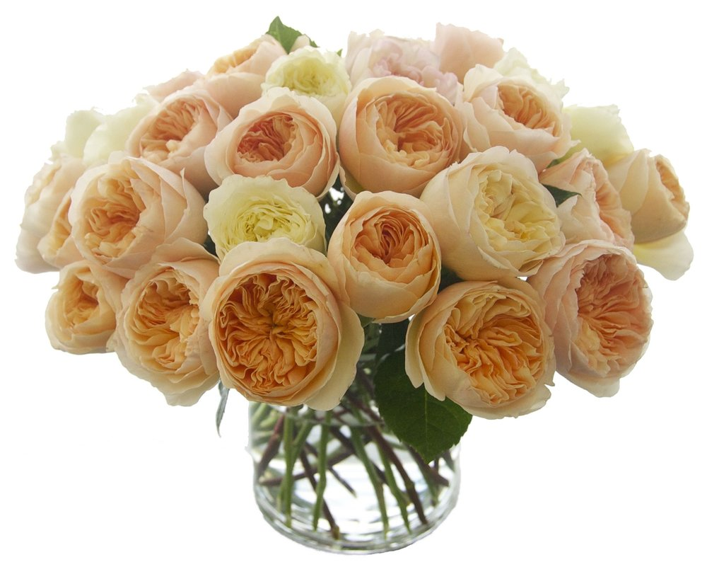 Orange and Creme Garden Roses start at $175