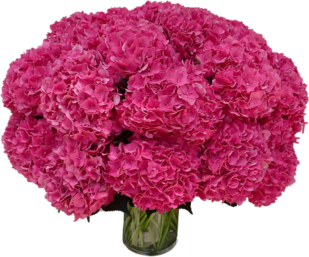 Hot pink hydrangea starts at $275