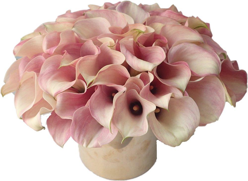 Blush Pink Callas start at $225