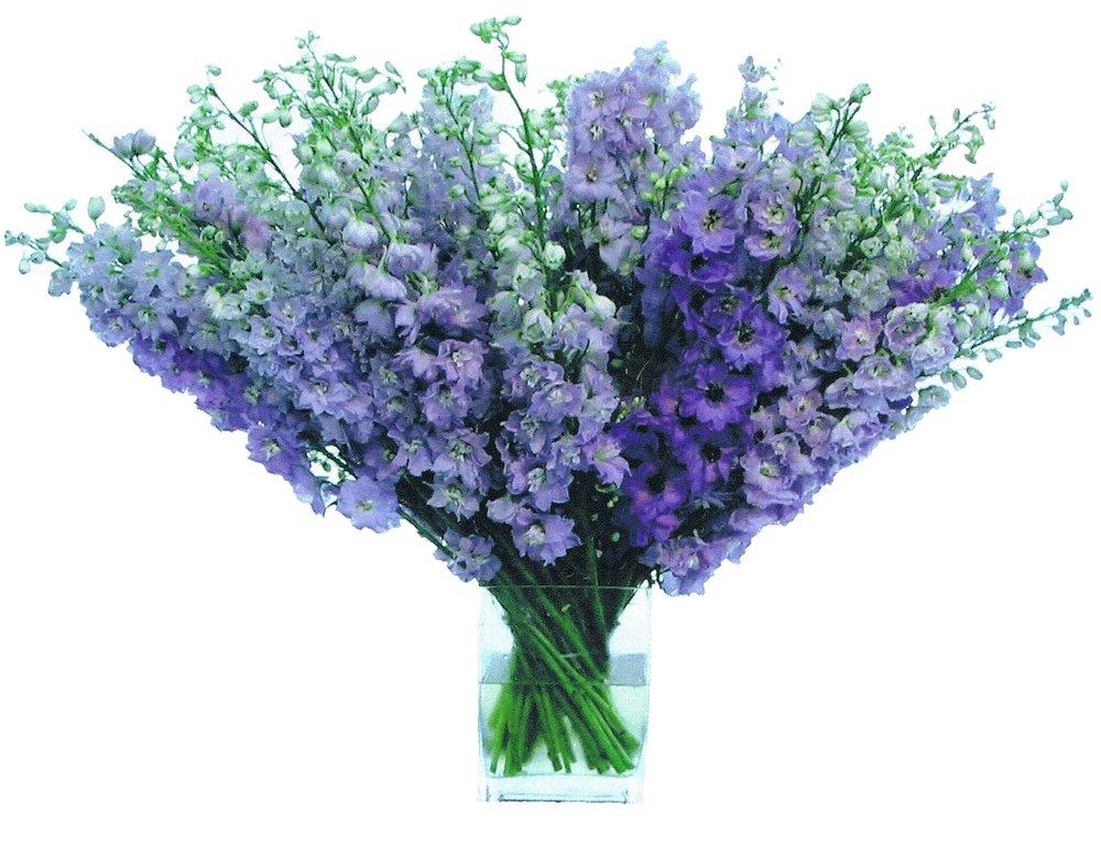 Purple Delphinium starts at $275