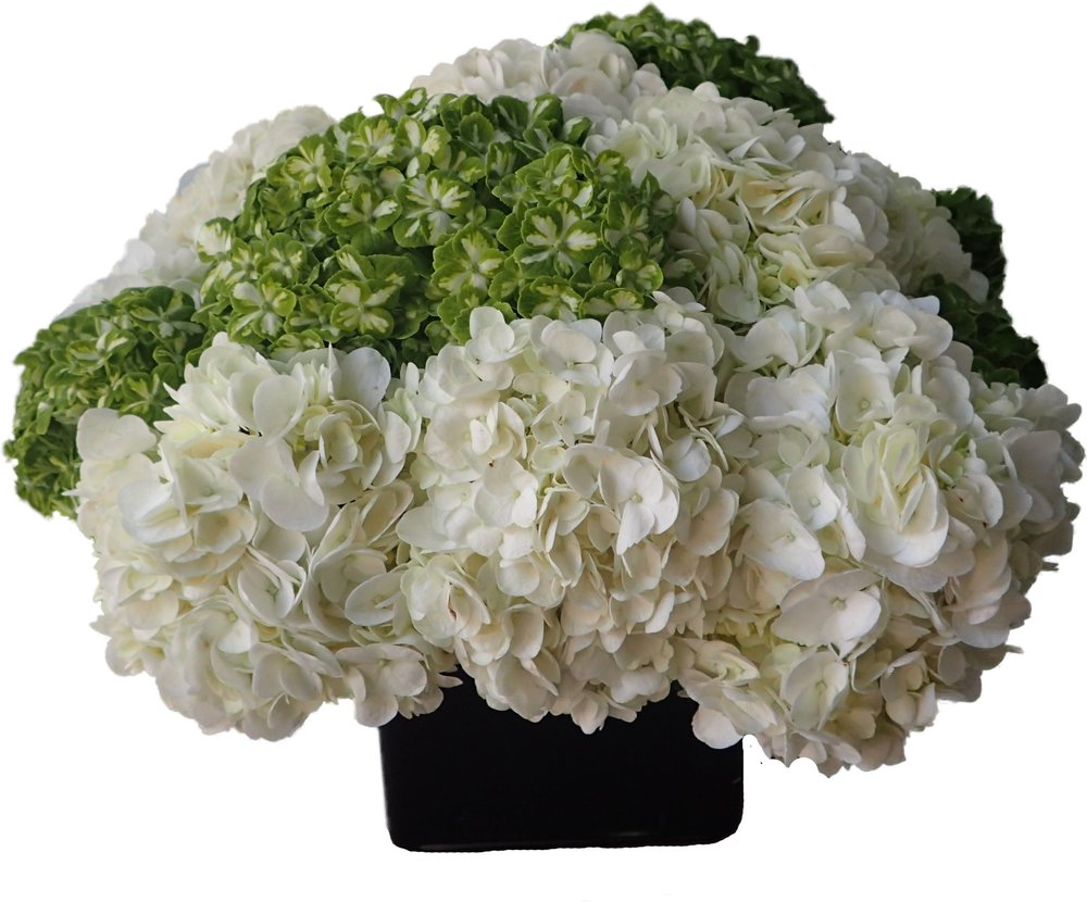White and Green Hydrangea starts at $225