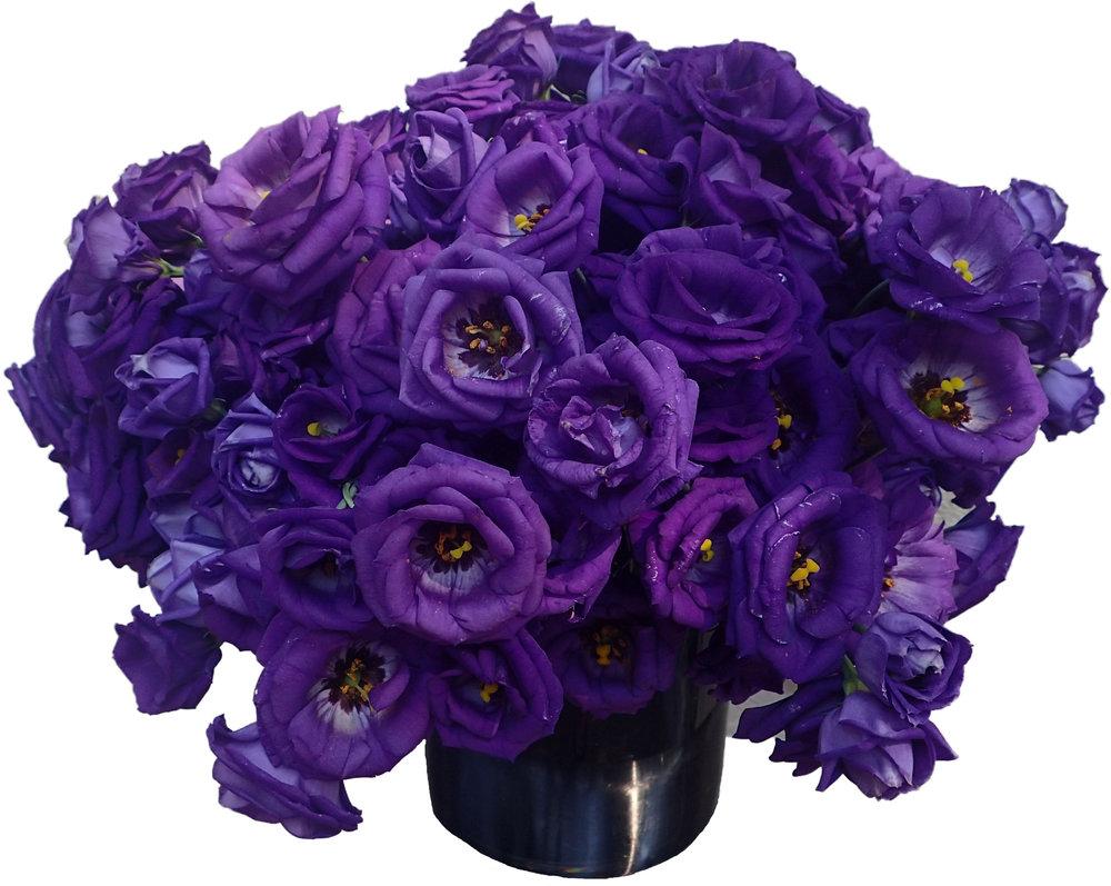 Purple Lisianthus starts at $275