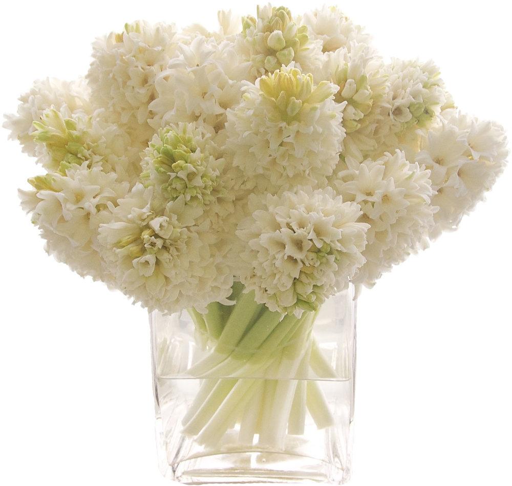 White Hyacinth starts at $125