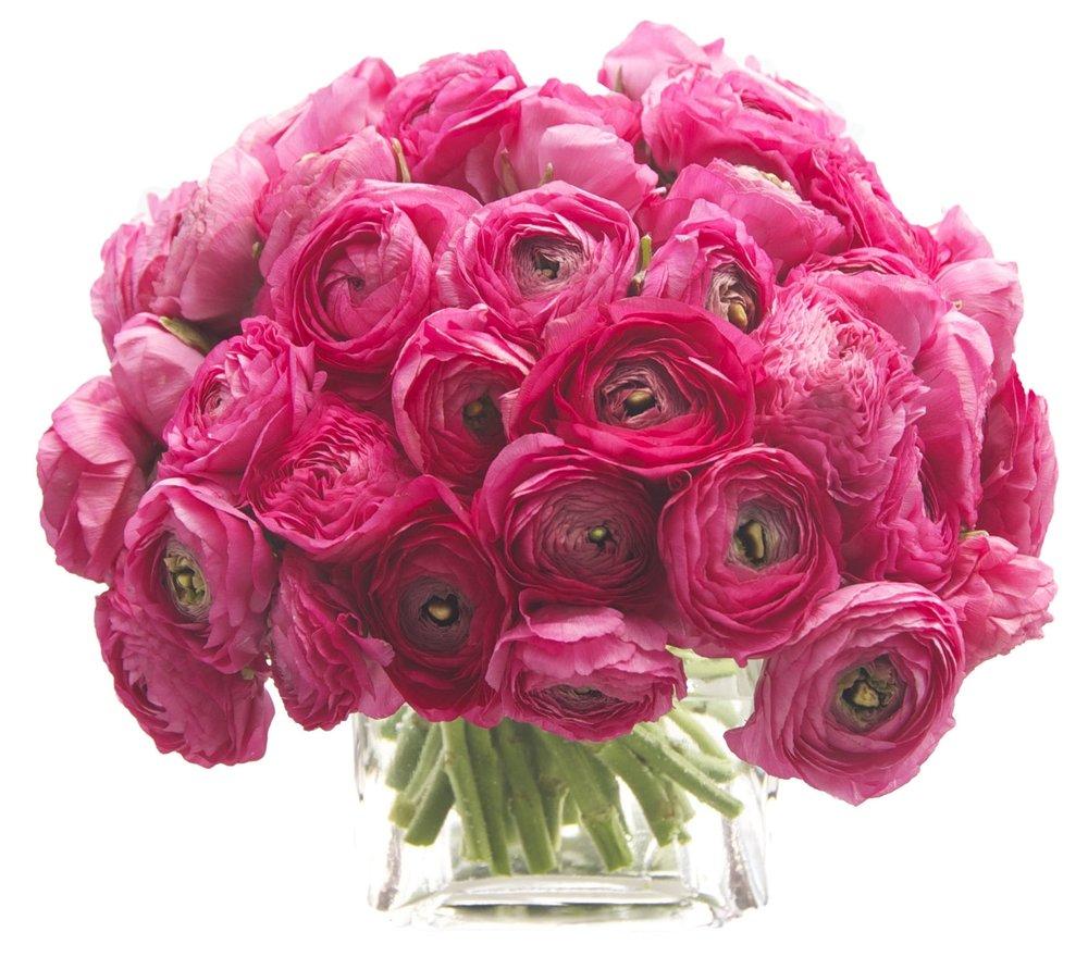 Hot Pink Ranunculus start at $250