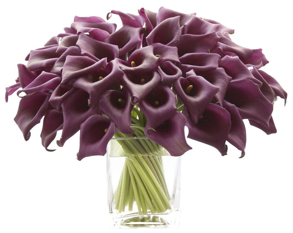 Eggplant Calla Lilies start at $225